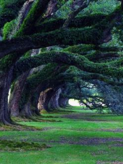 300 year old oak trees, Oak Alley Plantation, Louisiana, USA.: Alley Plantation, Nature, Louisiana, 300 Year, Beautiful, Travel, Places, Oak Trees, Oak Alley