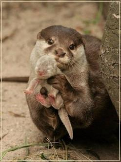 32 Pictures You Need to See Before you Die, which basically all involve animals.. except for the last one, but it's still hilarious: Babies, Animals, Sweet, Baby Otters, So Cute, Funny, Baby Animal, Adorable, Things