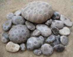 """""""A Petoskey stone is a rock and a fossil, often pebble-shaped, that is composed of a fossilized coral. The stones were formed as a result of glaciation, in which sheets of ice plucked stones from the bedrock, grinding off their rough edges and deposit"""