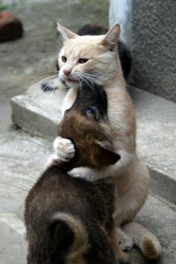 """Don't be scared, I've got you"".: Cats, Animals, Dogs, Friends, Sweet, Hug, Pets, Puppy"