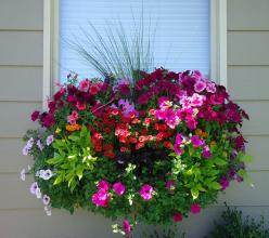 """ I absolutely love these planter boxes. I included wave petunia, burgundy and lime green potato vines, million bells, marigolds and ornamental grasses"" Shannon DeWeese Spokane, WA: Window Box Planter, Container Gardens, Idea, Potato Vines, Wave P"