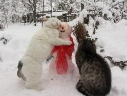 """I love you snowman!"" - Winter weather isn't all bad when you get to see something like this!: Cats, Animals, Winter, Pet, Funny, Snowman, Kitty, Photo, Friend"