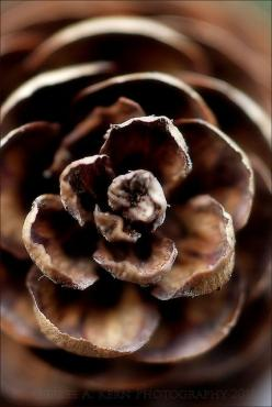 """In a few blinks you can almost see the winter fairies moving in . . . But first, you hear the crackle of their wings."" ― Vera Nazarian, The Perpetual Calendar of Inspiration: Color Brown, Autumn, Pinecones, Chocolate Brown, Fall Brown, Pine Cones, Ph"