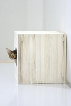 "* * "" Me haz a wall arounds me dat yoo can'ts even see. It takes a littles time to gets next to me."" ~Paul Simon - Tenderness: Cats, Kitty Cat, Animal Photography, Cat Peekaboo, Peek A Boos, Cat Love, Cat Boxes, Diy Projects"