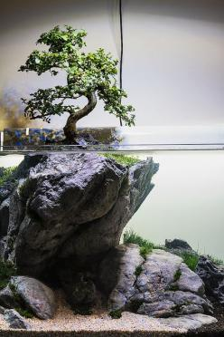 """Use your imagination"" by Filipe Oliveira. A tree aquascape with a real bonsai tree above water.: Aquariums Fish, Aquascaping Aquarium, Terrarium, Turtle Tank, Fishtank, Aquarium Idea"