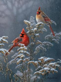 """Winter Cardinals on Goldenrod"" by Larry Zach I think this would make a pretty Christmas card: Animals, Winter, Nature, Female Cardinal, Art, Beautiful Birds, Red Birds, Cardinals"