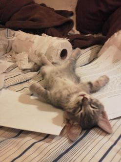 '...to be continued after my nap… '°: Cats, Animals, Pet, Funny, Kittens, Kitty, Toilet Paper