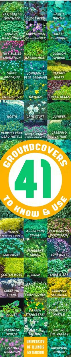 41 Groundcovers to Know & Use: 41 Groundcovers, Ground Cover Idea, Green Thumb, Flagstone Patio, Ground Covers, Gardening Landscape