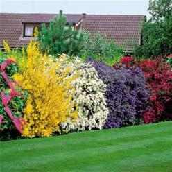 5 beautiful bushes to plant in the yard. good for privacy and very easy on the eye! such pretty colors! buddiea(pink),forsythia spectabilis(yellow), spirea arguta(white), ceanothus yankee point(blue), and weigelia(burgundy): Yard, Arguta White, Color, Flo