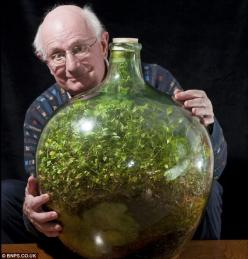 50 Year old Bottle Garden:   Still going strong: Pensioner David Latimer from Cranleigh, Surrey, with his bottle garden that was first planted 53 years ago and has not been watered since 1972 - yet continues to thrive in its sealed environment: Plants, 40