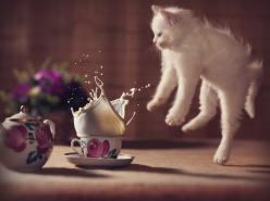 500px ISO » Unbelievable Photography » Best Photos of 2013: Cats: Cats, Picture, Photos, Animals, Kitten, Funny, Oops, Photography