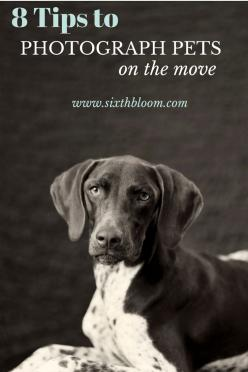 8 Tips to Photograph Dogs on the Move, Pet Photography, Pet Photographs, Animal Pictures, Photography Tips: Animal Pictures, Animal Photography Dog, Pet Photography Tip, Pet Photography Idea, Animal Photography Tip, Pet Photographs, Photography Tips, Phot
