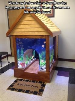 A Dog's Extravagant Crib. I love it, and when my puppy put her paw on the screen when I showed her, I knew she liked it to!: Cat, Dogs, Fish Tanks, Pet, Aquarium, Dog Houses, Fishtank, Animal