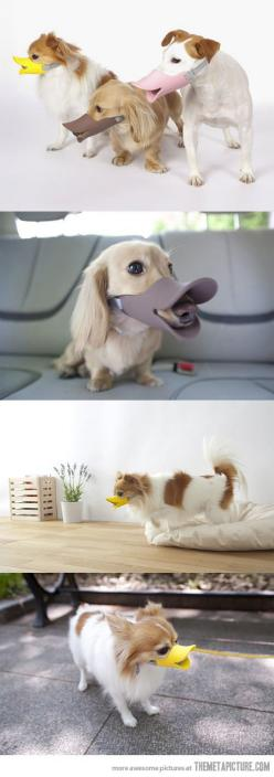 A duck-billed protective muzzle for dogs. May as well look hysterical if you can't play nice in the park. Also stops them from eating unsanctioned foods off the floor.: Dogs, Duck Muzzle, Pet, Duck Billed Protective, Play Nice, Protective Muzzle, Anim