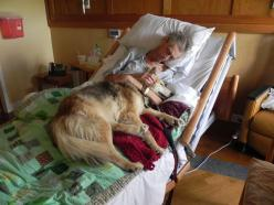 A dying man's last wish, to see his dog. Something you'd see as a hospice nurse.: Photos, Animals, Dogs, Best Friends, Pet, Beautiful, Dying Man, My