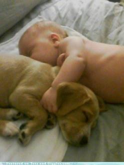 """A friend once said """"A child should never grow up without a dog, don't start asking when I will be expecting until I own a dog."""": Babies, Animals, Best Friends, Sweet, Dogs, Pets, Puppy, Photo, Baby Puppies"""