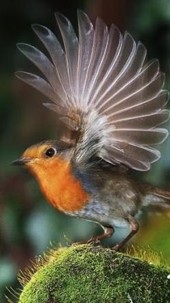 A milli-second before take-off: Animals, Birdie, Bird Wings, Beautiful Birds, Feathers, Beautifulbirds