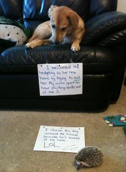 A painful lesson // funny pictures - funny photos - funny images - funny pics - funny quotes - #lol #humor #funnypictures: Animals, Dog Shaming, Pet, Funny Stuff, Funnies, Funny Animal, Hedgehogs