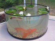A Patio Pond is the answer to what many Koi and fish owners desire. Koi are masterfully displayed and can be viewed and appreciated not just fom the top but from all angles.: Koi Ponds, Outdoor Patio, Aquarium, Koi Fish Pond, Fish Owners, Fish Ponds, Outd