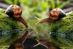 ABSOLUTELY FABULOUS MICRO PHOTOGRAPHY       you are very thirsty?                            by nordin seruyan, via 500px: Photos, Snails, Animals, Nature, Beautiful, Creatures, Pictures, Photography