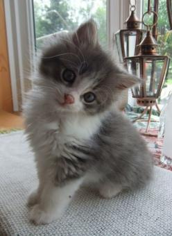 Adorable!!!: Cats, Animals, Sweet, Pets, Adorable, Kittens, Baby, Kitties, Kitty