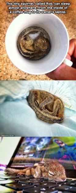 adorable.: Tiny Squirrel, Tiny Chipmunk, Adorable Animals, Baby Squirrel, Pet, Meet Rob, Baby Animals, Funny Squirrel Tiny Sleep Mug, Coffee Mugs