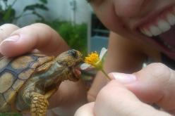 adorbs: Animals, Tortoise, Pet, Funny, Turtles, Things, Nom Nom, Flower