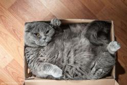ahhh - a perfect fit! #Cat needing a new Cat Tree...Shopforpaws.com has a great selection and free shipping. http://shopforpaws.com/cats-kittens/cat-trees: Cats, Fit, Animals, Kitty Cat, Boxes, Funny, Fat Cat, Crazy Cat
