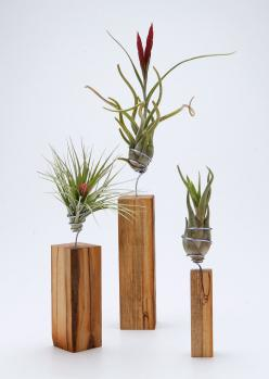 AirplantVessel in hand finished wood - Hand wired stand that can be removed to soak the air plant: Airplants, Hands, Air Plants, Airplantman Webshop, Finished Wood, Airplantvessel Wood, Woods, Products