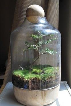 amazing bonsai terrarium ~ how does one do this? someone please teach me!: Bonsai Tree Terrarium, Bonsai Trees, Ideas, Bonsai Terrariums, Amazing Bonsai, Garden