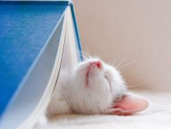 And they all lived happily ever after.  The end.: Cats, Animals, Reading, Cat Nap, Pet, Kittens, Kitties, Kitty, Good Books