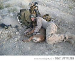 ...and you want to complain about an uncomfortable bed... REALLY?                                       Thank you troops!    ❤️: Animals, Heroes, Dogs, Friend, Man, Military