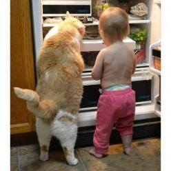 Angie: Funny Animals, Cats, Photos, Google, Pets, Fat Cat, Children, Kids, Baby