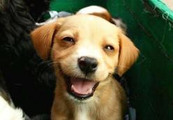 :): Animals, Puppies, Pet, Happy Puppy, Puppys, Funny, Happy Dogs, Smile