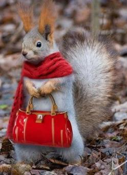 animals, squirrels, chipmonks etc ...........click here to find out more http://googydog.com: Animals, Red, Stuff, Squirrels, Purse, Funnies, Funny Animal, Shopping, Things