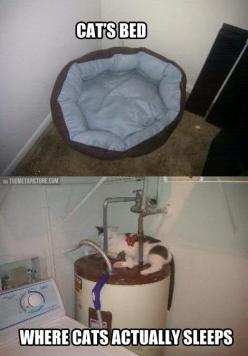 Anyone have a kitty like this? Mine prefers cardboard boxes. :-) -HamCoHealth: Cat Beds, Funny Animals, Kitty Cats, Funny Cats, Cats Bed, Water Heater, Crazy Cat, Cat Lady