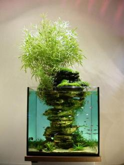 aqua-bonsai, but not by aquabonsai.etsy.com, inspiration for sure!: Aquariums Fishtanks, Fish Tanks, Fish Aquariums Ideas, Aquarium, Vertical Garden, Aquascape, Aquarium Idea, Aquascaping
