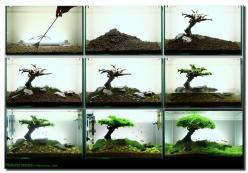 "Aquascaping | ... the Month: September 2008 ""Pinheiro Manso"" 