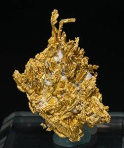 Arborescent growths, on matrix, of strongly elongated Gold crystals, some of them with very well defined terminal faces, curvatures and wires. It is quite different than usual at this mine.: Gold Crystals, Round Mountain, Nye County, Rock, Earth, Nv Mw