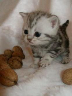 as baby as a baby kitten can be <3: Cats, Animals, So Cute, Pet, Kittens, Baby Kitty, Big Head