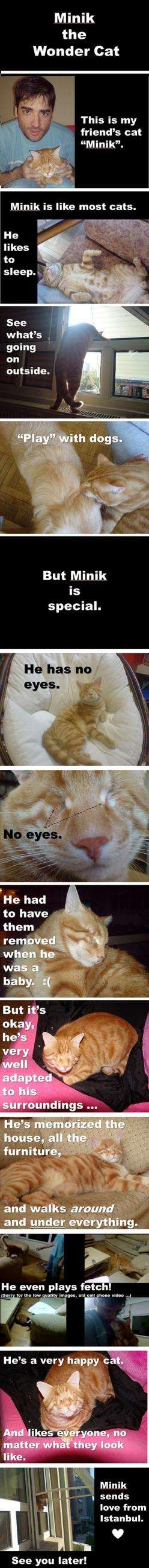 Aww he's so cute!!!!: Cats, Sweet, Pet, Wondercat, Wonder Cat, Kitty, Cat Lady, Eye, Animal