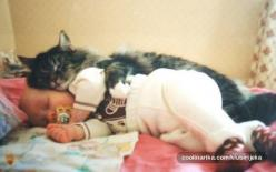 awww: Cats, Babies, Animals, Sweet, So Cute, Pets, Funny, Things, Kitty