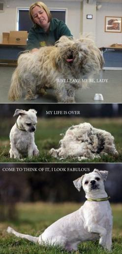 Awww lol: Funny Animals, Dogs, Stuff, Funny Pictures, Hair Cut, Dog Grooming, Puppy, Haircut