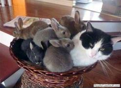 Awwww...they needed a Mommy <3 <3: Cats, Rabbit, Animals, Funny, Bunnies, Kitty, Friend