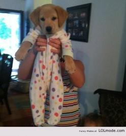 Baby puppy love!!! Ridiculous but if totally do this. Haha: Puppies, Animals, Dogs, So Cute, Pet, Puppys, Funny, Baby