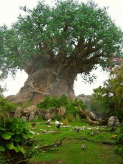 Baobab,Tree of Life. . this simple fact that THIS is REAL absolutely blows my mind: Baobabtree, Baobab Trees, African Trees, Tree, Beautiful Trees, Amazing Trees, Nature Trees, Tree Of Life