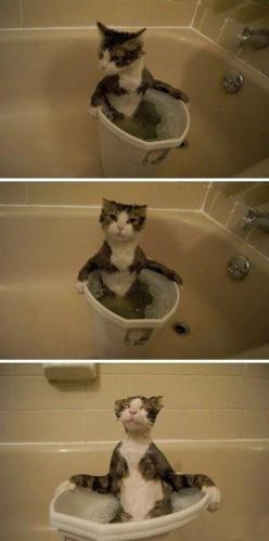 Bath time: Animals, Funny Cats, Bath, Crazy Cat, Funnies, Kitty, Cat Lady