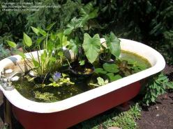 beautiful bathtub pond...now I just need an old claw-foot tub!: Bathtub Pond Now, Claw Foot Tub, Beautiful Bathtub, Backyard Ideas, Vintage Bathtubs, Bathtub Fishpond