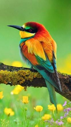 Beautiful Bee-Eater -You may like video: https://www.youtube.com/watch?v=Dev2x4Jocc0 - Image Source: http://birdsanimals17.blogspot.com/2015/03/european-bee-eater.html: Colorful Birds, Animals, Bees, Nature, Beautiful Birds, Ave