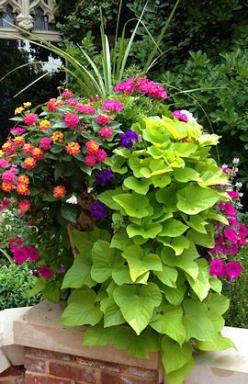 Beautiful Container Garden with spikes, pink geranium, lantana, violet and magenta petunias, and cascading sweet potato vine.: Garden Container, Flower Container, Sweet Potato Vine, Container Garden, Flower Pot, Container Planting, Container Idea, Outdoor